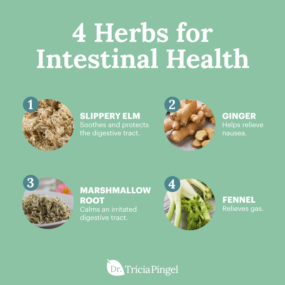4 Herbs for intestinal health - Dr. Pingel