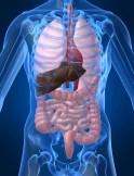 Hepatitis C Risk Factors 2