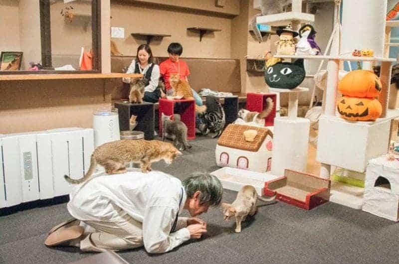 Calico Cat restaurant in Tokyo