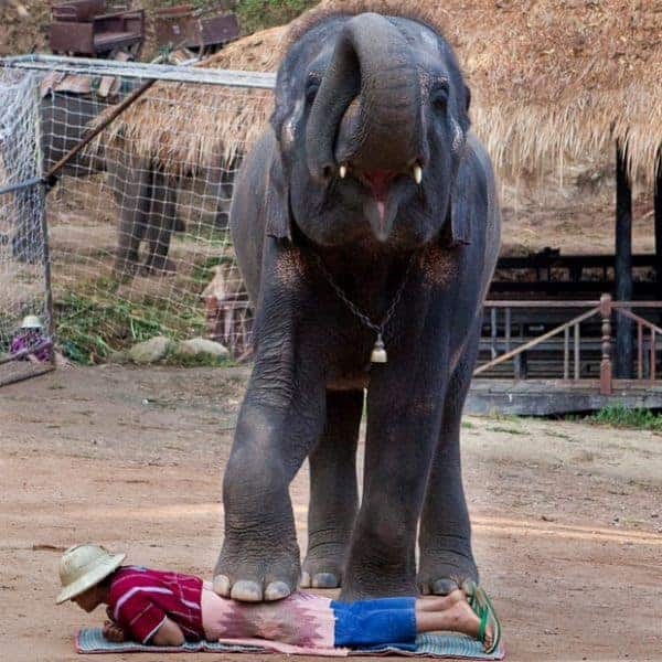 Massage from elephant