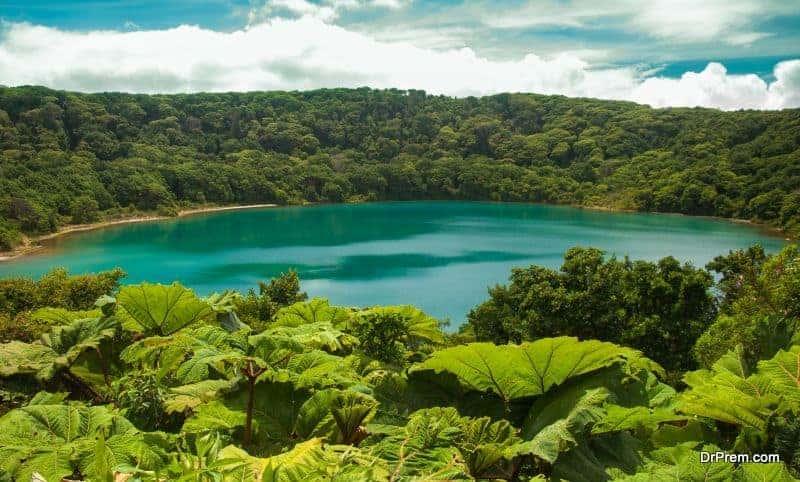 lush-rainforests