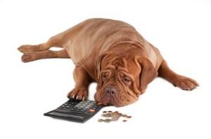 Dog_Budget_Money_Image