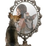 Chihuhua in front of a mirror