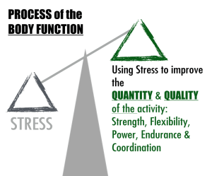 Stress Quality of Life Graphic