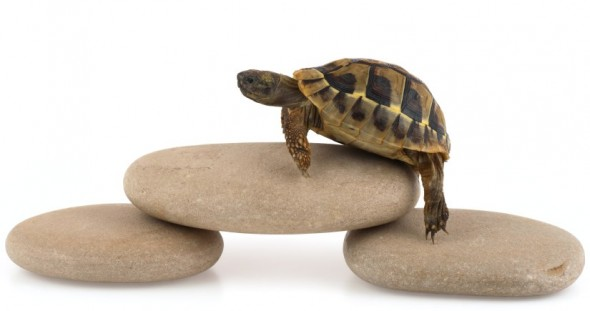 How to Win Slowly - Physician Leadership