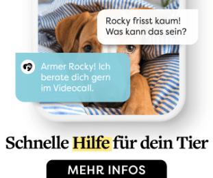 Dr. SAM - dein online Tierarzt