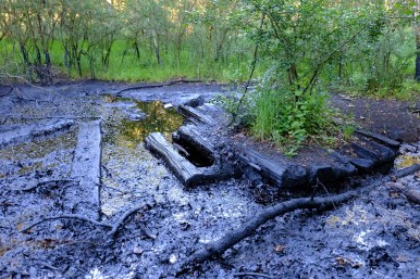 Oil in the middle of an Alsatian forest