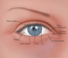 El ojo de raza blanca, detalles