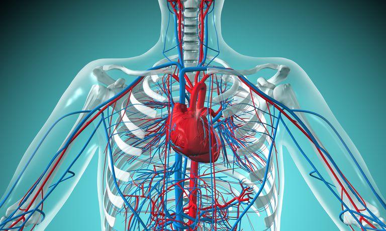 cardiovascualr