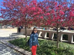 Anna beneath some cherry blossoms