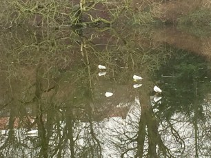 I initially though these birds had pulled a David Copperfield, but the lake was just frozen