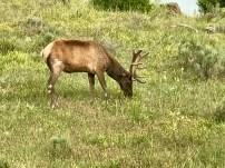 A nearby deer