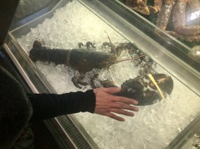 Anna's hand next to a lobster for perspective
