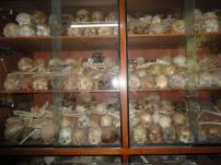 One of several cupboards full of human skulls and bones
