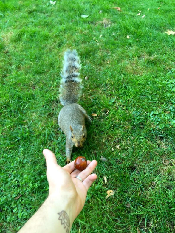 It turns out they don't eat chestnuts
