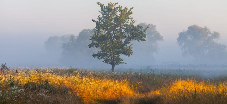 Perceiving Happiness: Wandering the Dark Meadow