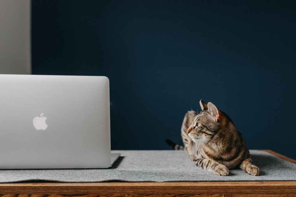 cat beside a laptop on a brown wooden table