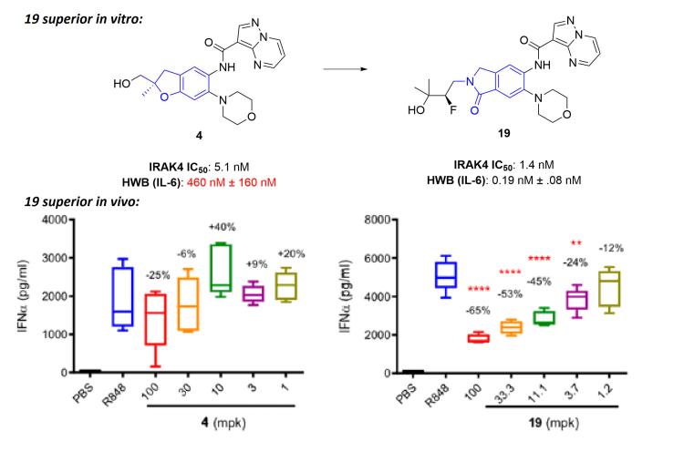 Summary of Genentech IRAK4 optimization and in vivo data