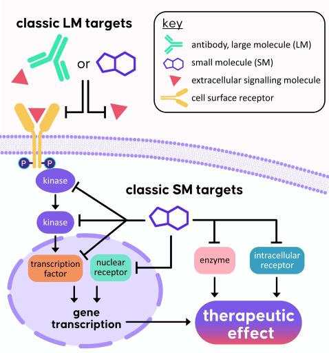 Depiction of a cross-section through a cell with large molecules drugging extracellular receptors and signaling molecules and small molecules drugging intracellular proteins