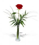 un-fir-de-trandafir-rosu-8i2e7278cs