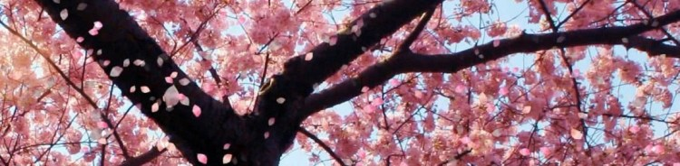 cropped-cropped-cherry-blossom8