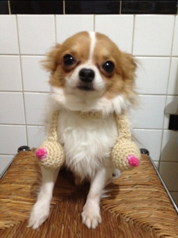Crocheted boob scarf pattern for a tiny dog