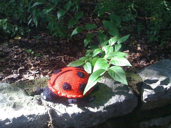 Crochet lady bug pattern