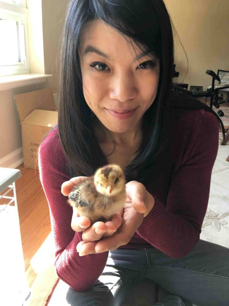 Woman holding baby chicken