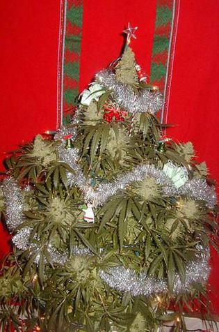 marijuana-christmas-tree