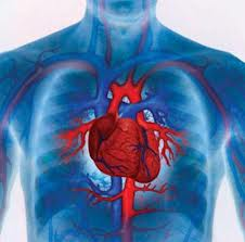 Печать человеческого сердца в 3-D.