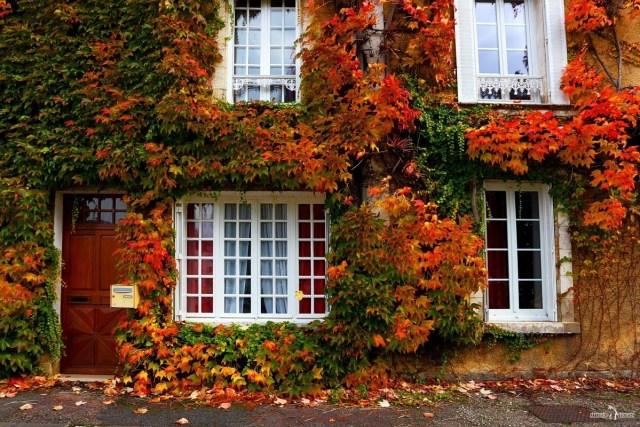Франция. Осер. Дом с осенними листьями