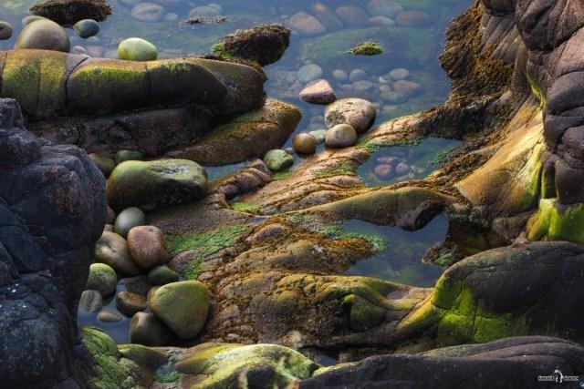 Камни и водоросли