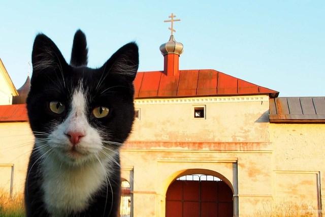 Зеленецкий монастырь и кот зеленецкий. При монастыре очень много котов, кошек и котиков