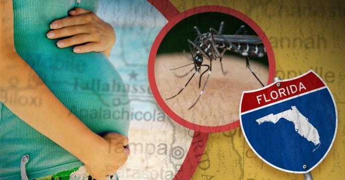Zika Florida inforgraphic 1200x628