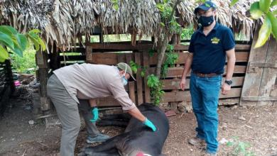 Photo of Ante incendios, la fauna silvestre llega a José María Morelos