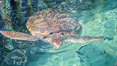 Photo of Trabaja Tortugranja en cuidado y vigilancia de tortugas marinas