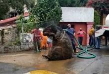 Photo of Encuentran botarga de rata gigante en drenaje tras lluvias en CDMX