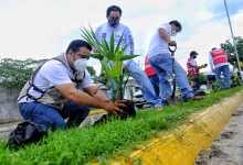 Photo of Preserva comuna buena imagen de Isla Mujeres con trabajos de reforestación