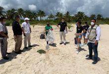 Photo of Se suma hotel Atelier Playa Mujeres a curso del ayuntamiento para preservar tortugas marinas