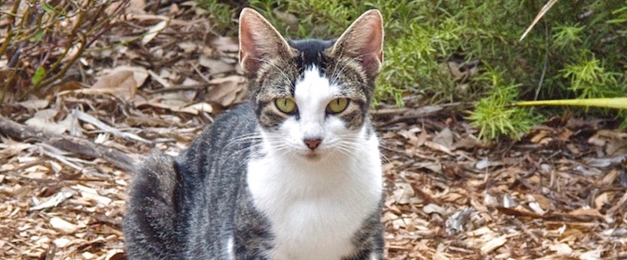 Feral Cat Fridays: Sherman Marches In
