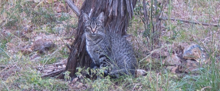 Feral Cat Fridays: Grable Comes To Town