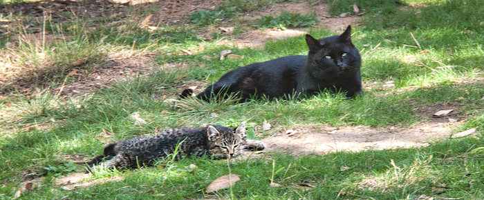 Feral Cat Fridays: A Black Cat For Black Friday