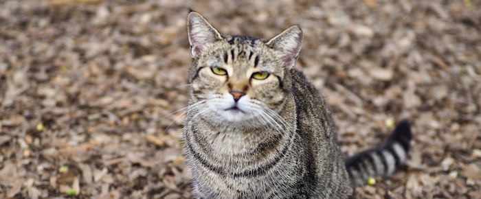 Feral Cat Fridays: And Now There Is Only One