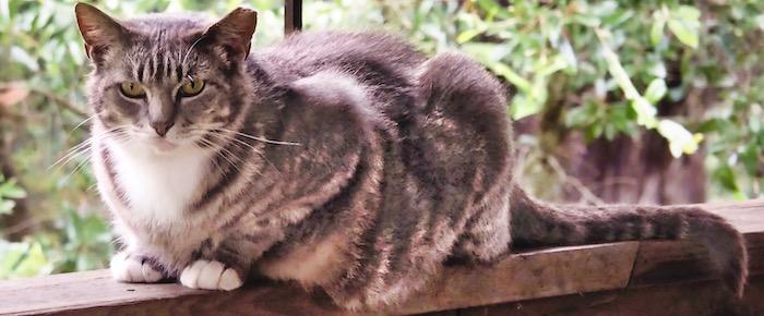 Feral Cat Fridays: Stoney Assumes Command