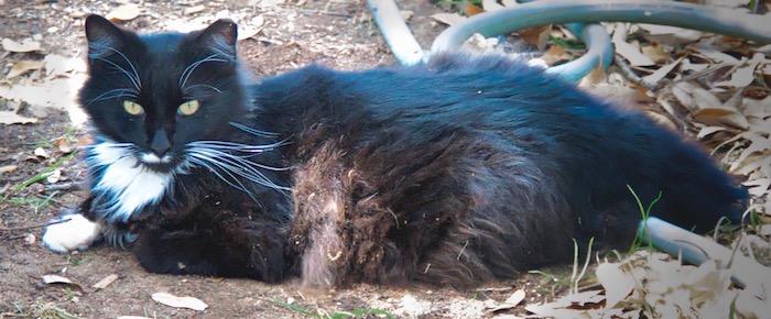 Feral Cat Fridays: Fuzz On Your Tux? No Problem!