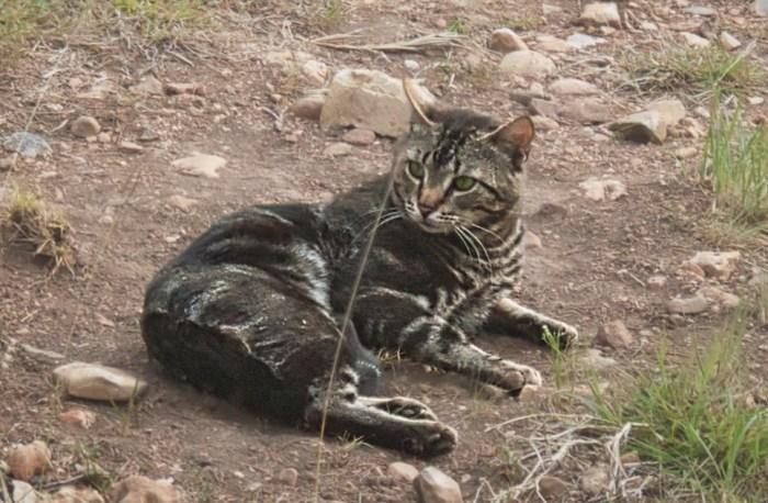 Feral cat alert but beginning to relax