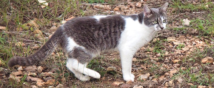 Feral Cat Fridays: Sherwood Of The Forest