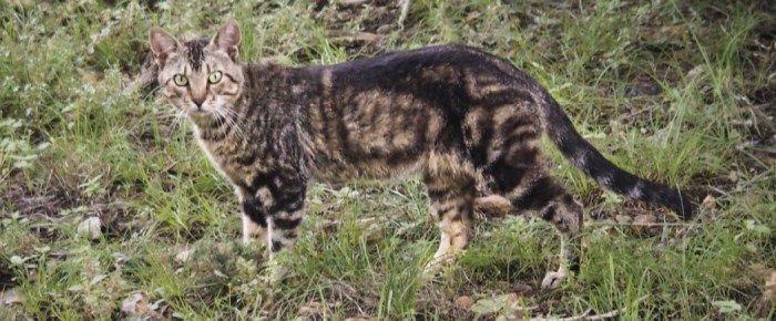 Feral Cat Fridays: Chiefly About Thomas