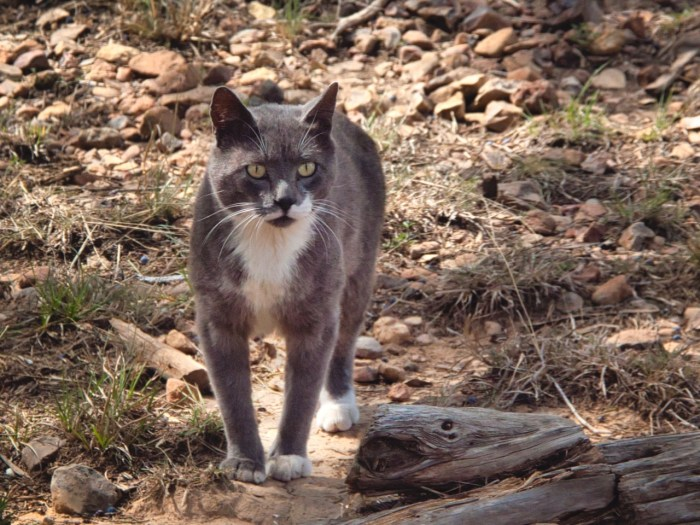 Stubby the feral cat
