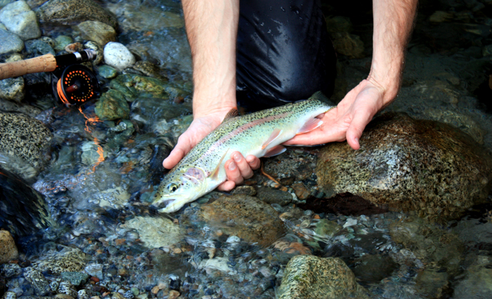 rainbow-flyfishing-pacific-northwest